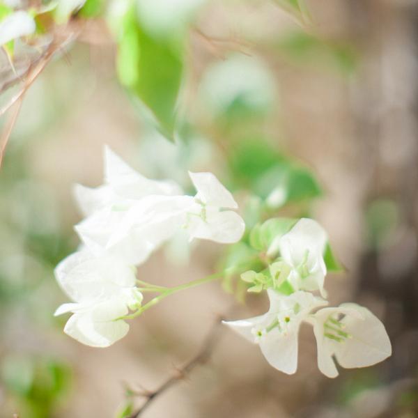 blomst- www