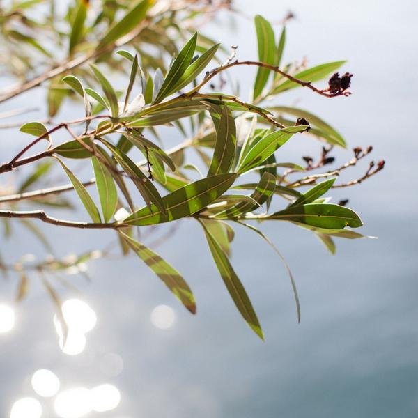 blomst:vand -www